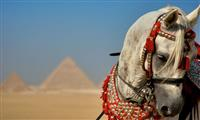 2 Days Trip to the Best of Cairo