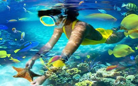 Snorkeling in Tiran Island by Cruise