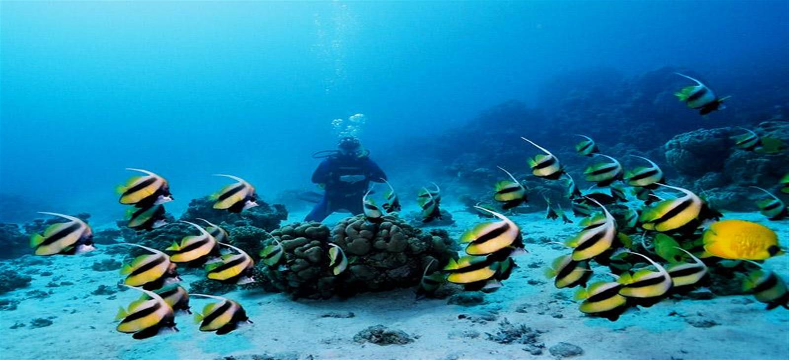 Red sea hurghada Diving